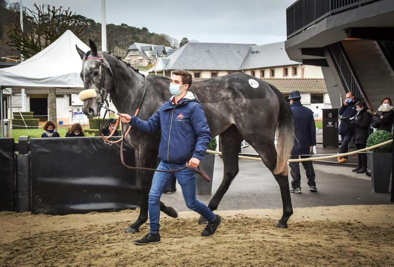SALES: Arqana welcoming people and horses