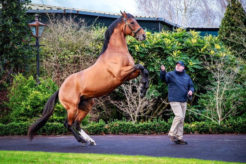 SIRE REVIEWS: Standing at Coolmore Stud: Saxon Warrior