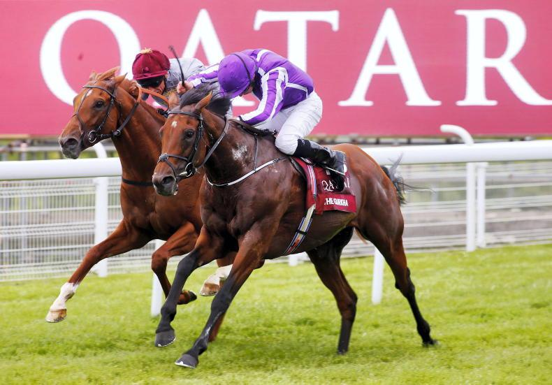 SIRE REVIEWS: Standing at Coolmore Stud: The Gurkha