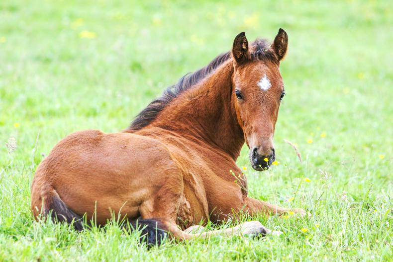 FOALING FEATURE 2021: Caring for the newborn foal