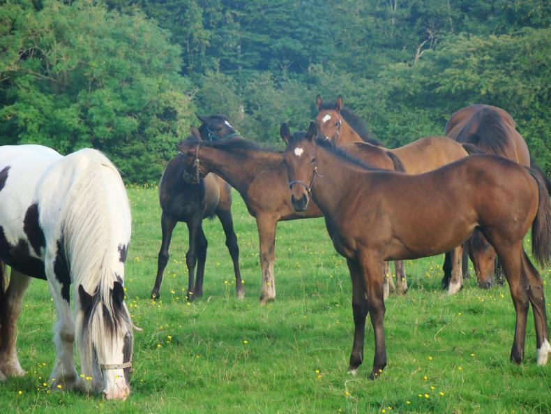 FOALING FEATURE 2021: Foster mares: Help is at hand