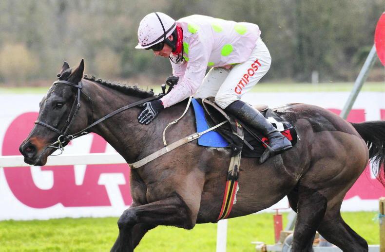 HORSES TO FOLLOW: Koshari catches the eye