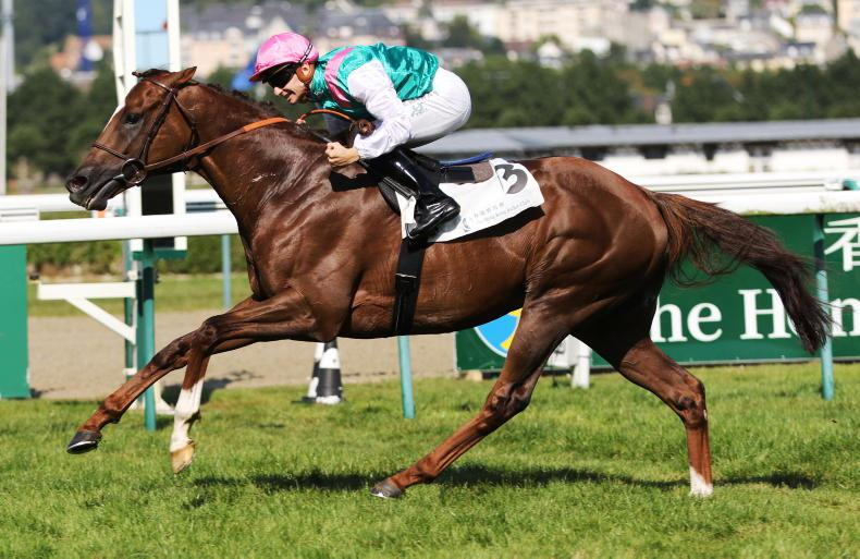 SIRE REVIEWS: Standing at Ballylinch Stud: New Bay