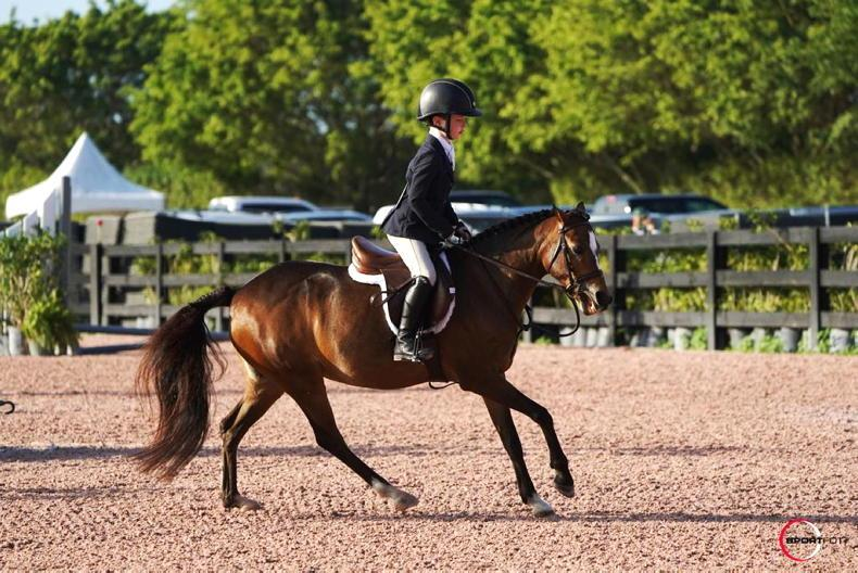 PONY TALES: WEF debut for Ben O'Connor