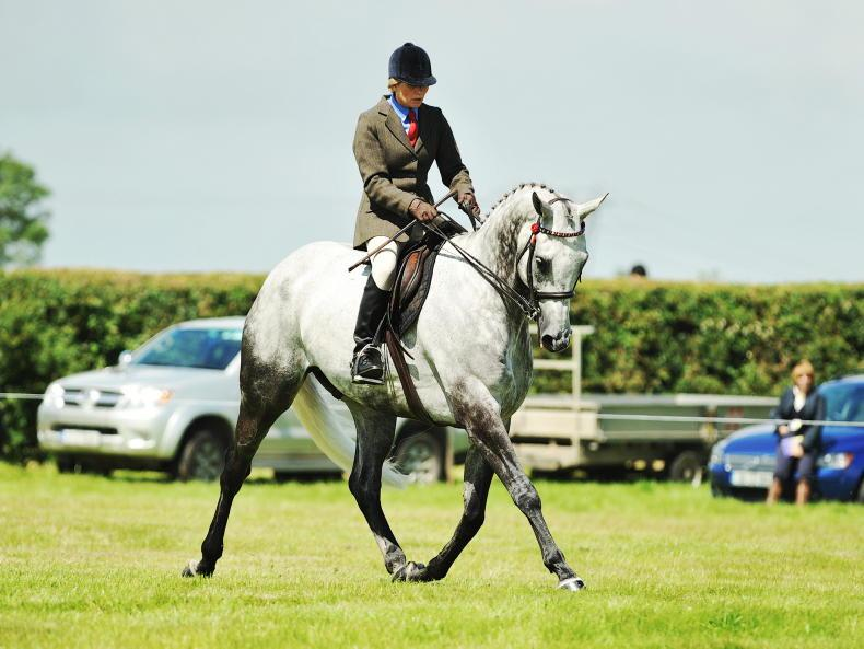 HORSE SENSE: Bright future ahead for ex-racehorses