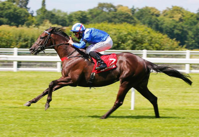 SIRE REVIEWS: Standing at Nunnery Stud: Mohaather