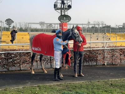 Bachasson bags Red Mills Chase glory at Gowran