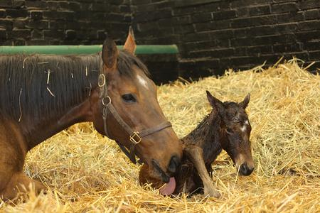 Kind dies, aged 20, after complications in foaling