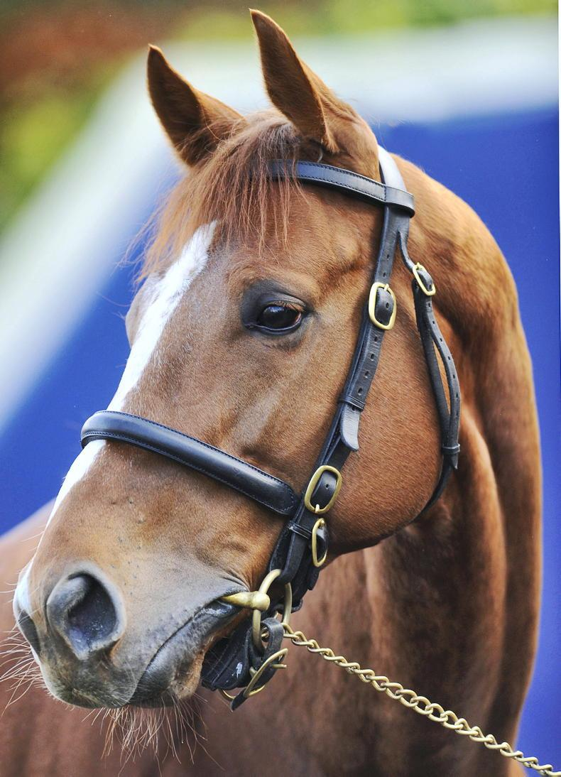 SIRE REVIEWS: Standing at Haras de Bouquetot: Ruler Of The World