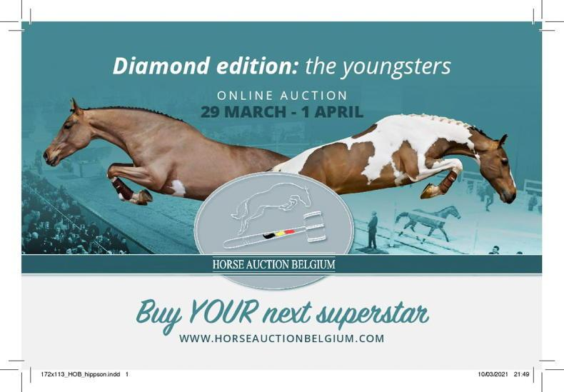 ADVERTORIAL: Quality bloodlines on offer at Horse Auction Belgium