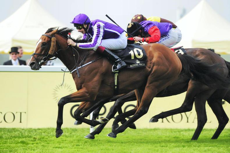 SIRE REVIEWS: Standing at Grange Stud: Leading Light