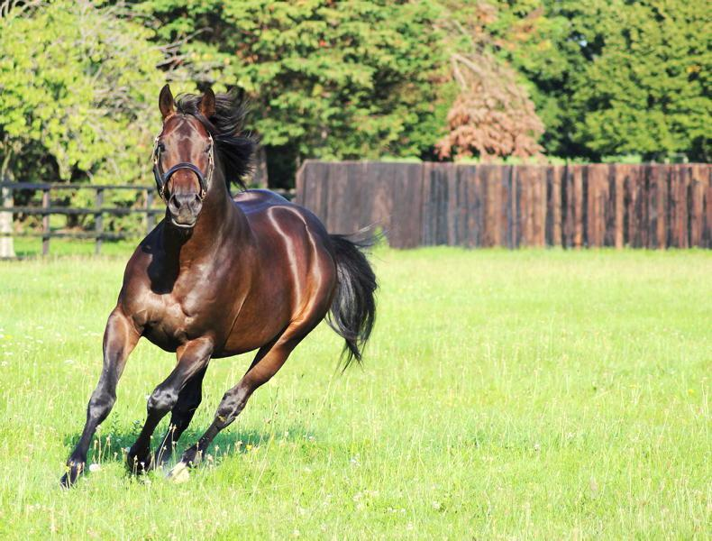SIRE REVIEWS: Standing at Anngrove Stud: Marcel