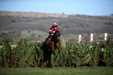 Tiger rolls back the years to win at Cheltenham again