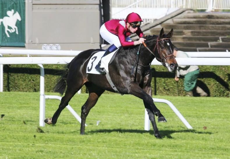 SIRE REVIEWS: Standing at The Beeches Stud: Ocovango