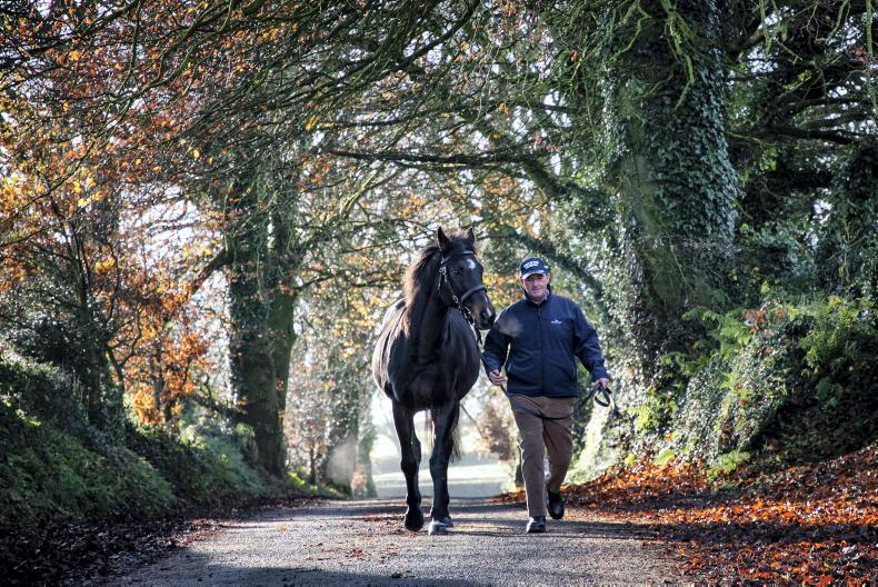 SIRE REVIEWS: Standing at The Beeches Stud: Soldier Of Fortune