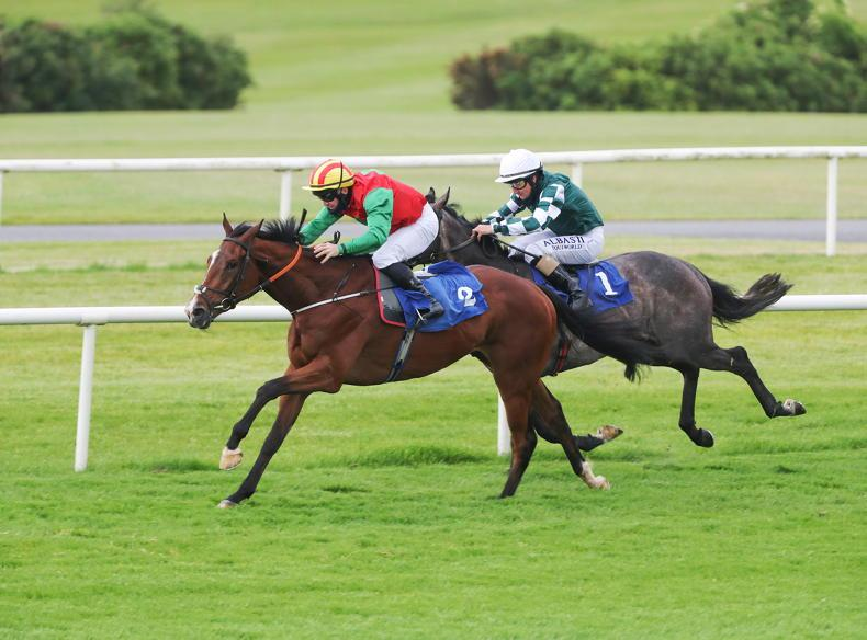 NAVAN SATURDAY PREVIEW: Go with Collaborating to take advantage of reduced mark