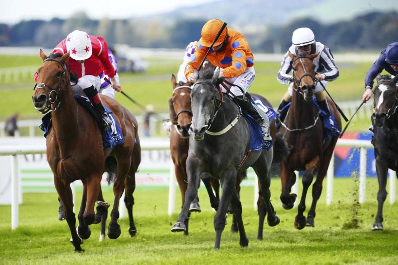 NAAS SUNDAY: More to come from Fantasy Lady in the Park Express