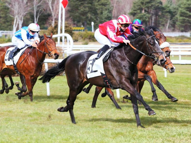 ARQANA ONLINE MARCH SALE: Whitehead's Voice tops select trade at Aqrana