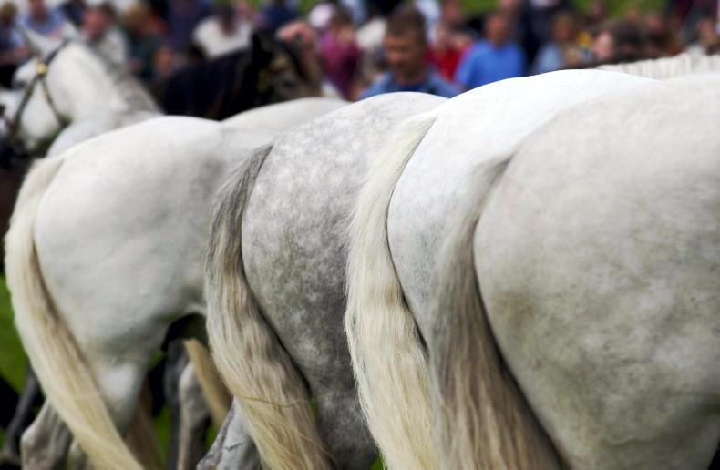 HORSE SENSE: Investing in young horses