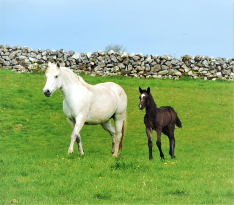 STALLIONS GUIDE: Foaling kit essentials
