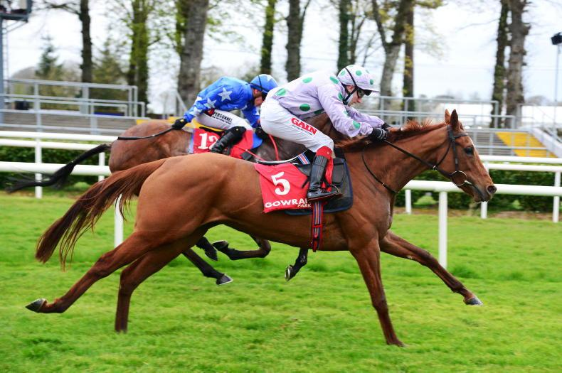 DUNDALK SATURDAY PREVIEW: Pineapple for a quick follow up