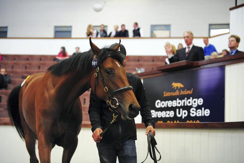 SALES: Tattersalls switch Goresbridge Breeze Up to Newmarket