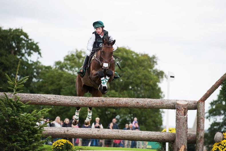 FEATURE - Tim Bourke: 'I've never looked anywhere else but Ireland for horses'