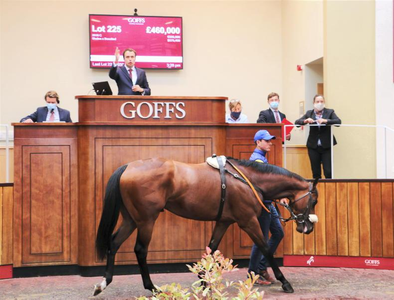 SALES: Time to find the next Steel Bull at Doncaster