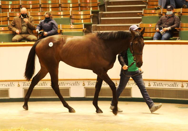 SALES: Tally-Ho Stud breezer fetches 360,000gns
