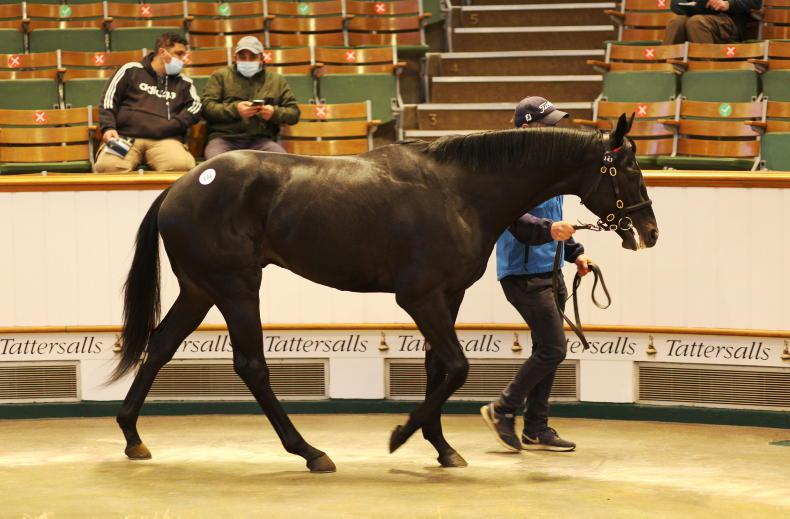 SALES: Clearance rate hits 88% at Craven Breeze Up Sale