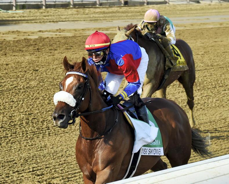 AMERICAN PREVIEW: Swiss to swift for Monomoy Girl?