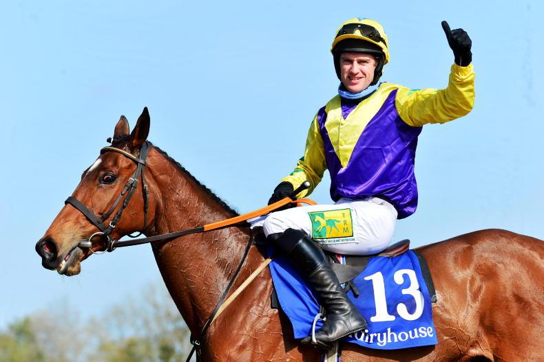 Bargain-buy Skyace all set for Punchestown