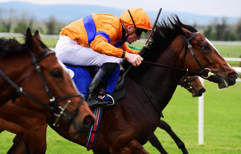 TIPPERARY TUESDAY: Ascot in mind for smart Elliptic