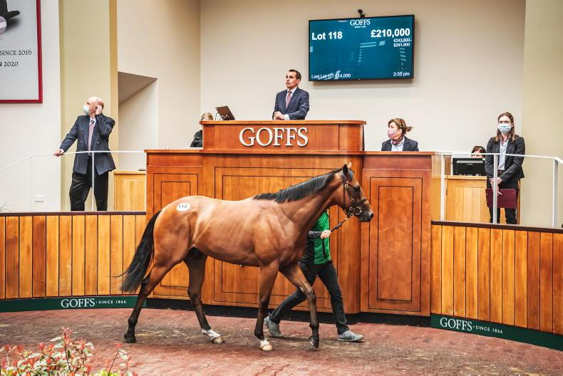 SALES: Michael O'Callaghan spends £500,000 on six horses