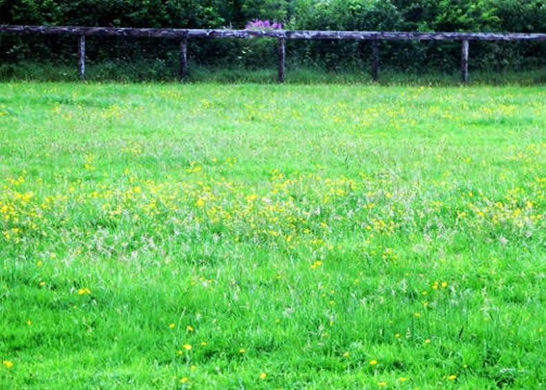 GRASSLAND MANAGEMENT: ADVERTORIAL: Tips on weed control in equine paddocks