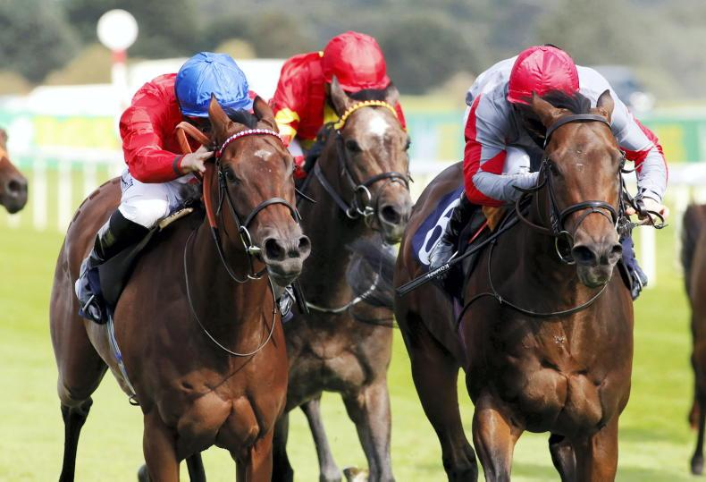TIME WILL TELL: Sacred has Guineas style