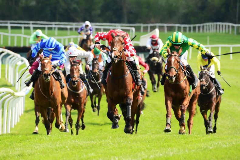 NEWS: NH owners and trainers appeal for more races