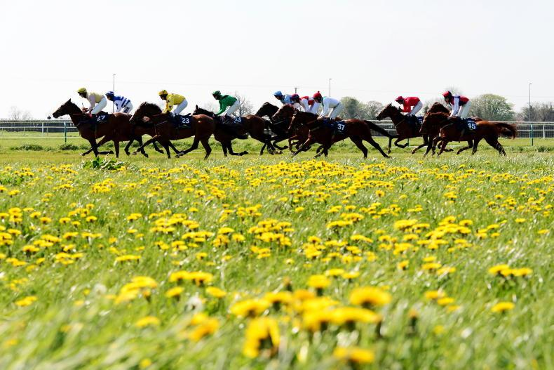POINT-TO-POINT PHOTOS: Action from Tipperary and Fairyhouse