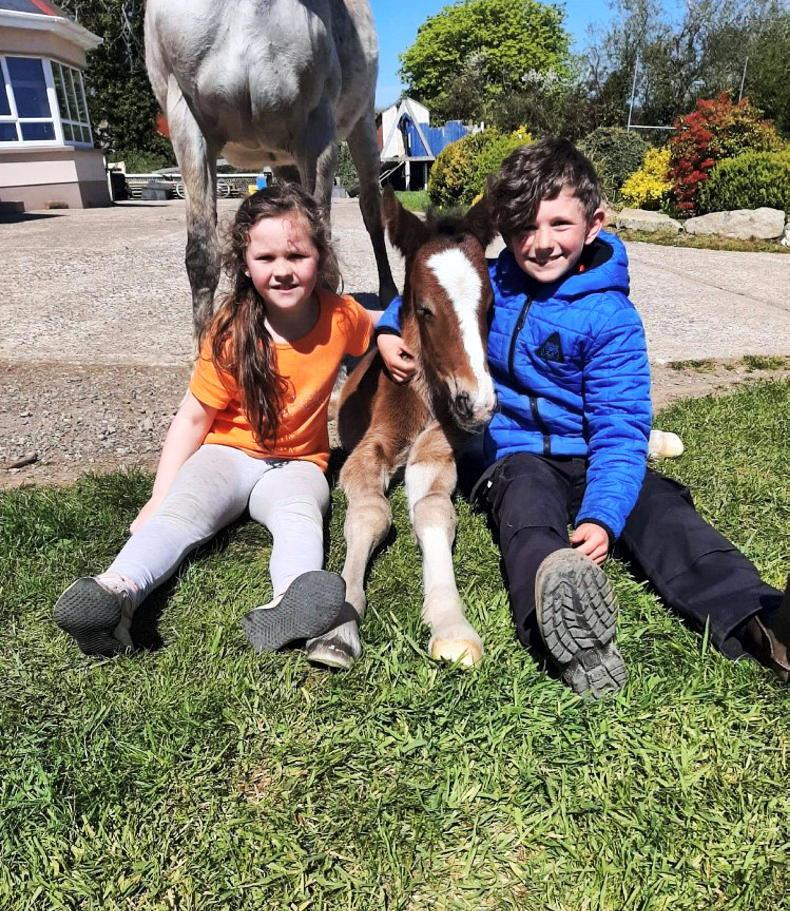 PONY TALES: All in a day's work...