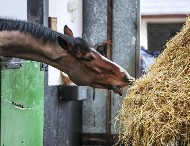 HORSE SENSE: Forage calculator launched to tackle equine obesity