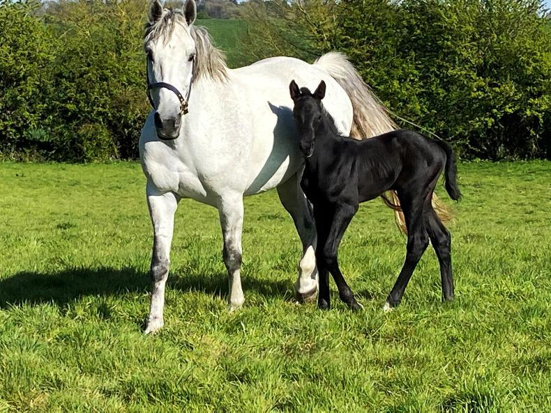 PICTURE DESK: Your foal pictures....