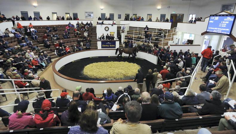 SALES: Lots of Grade 1 siblings in Derby Sale