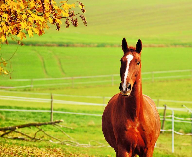 HORSE SENSE: Strict management needed to prevent laminitis