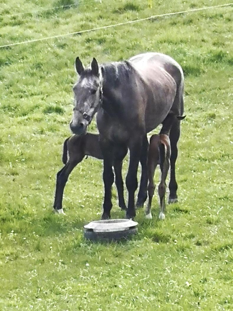 NEWS: Quick action saves twin foals