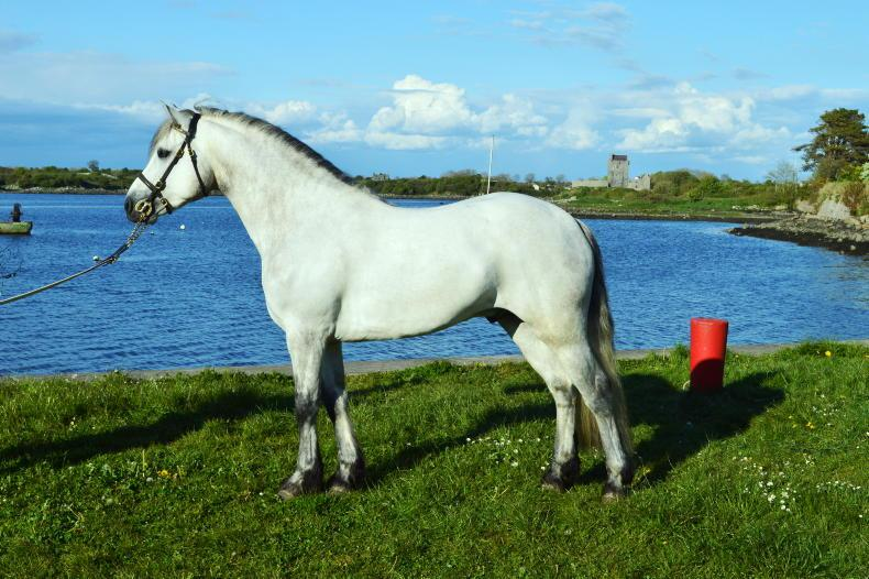 PONY TALES: From castle to quayside....