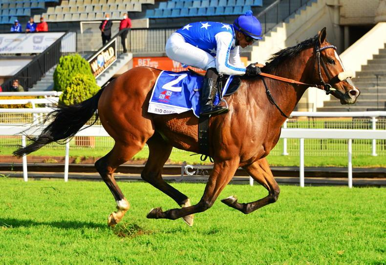 SOUTH AFRICA:  Rio Querari rules in Group 1 Sprint