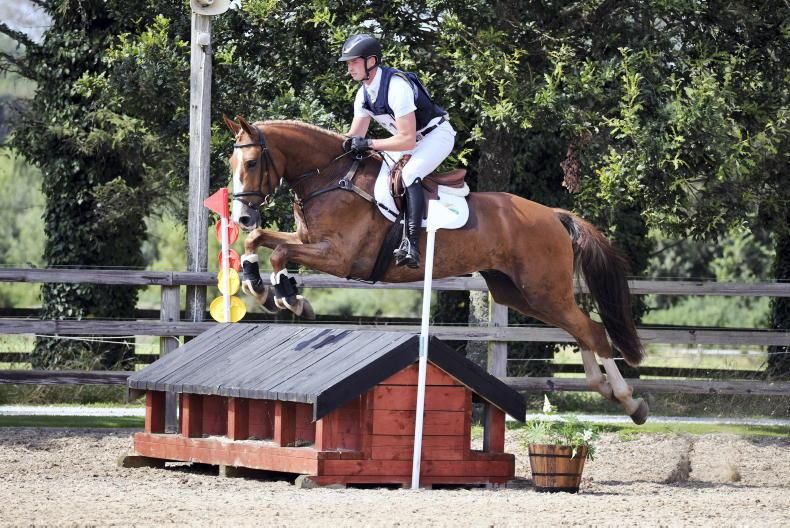 GORESBRIDGE SALES PREVIEW: Quality horses and ponies offered