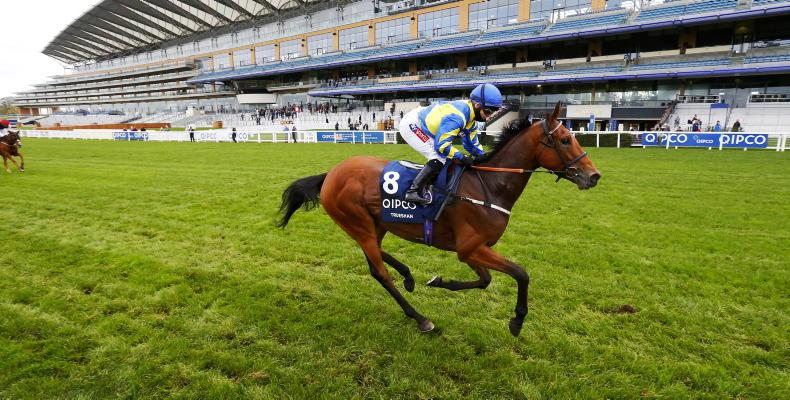 SALES: Long Friday session in store at Newmarket