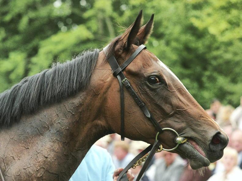 BREEDING INSIGHTS: You'resothrilling is oh so Marvellous
