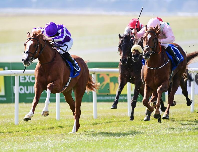 NAVAN SATURDAY PREVIEW: Words worth backing to emerge as exciting stayer